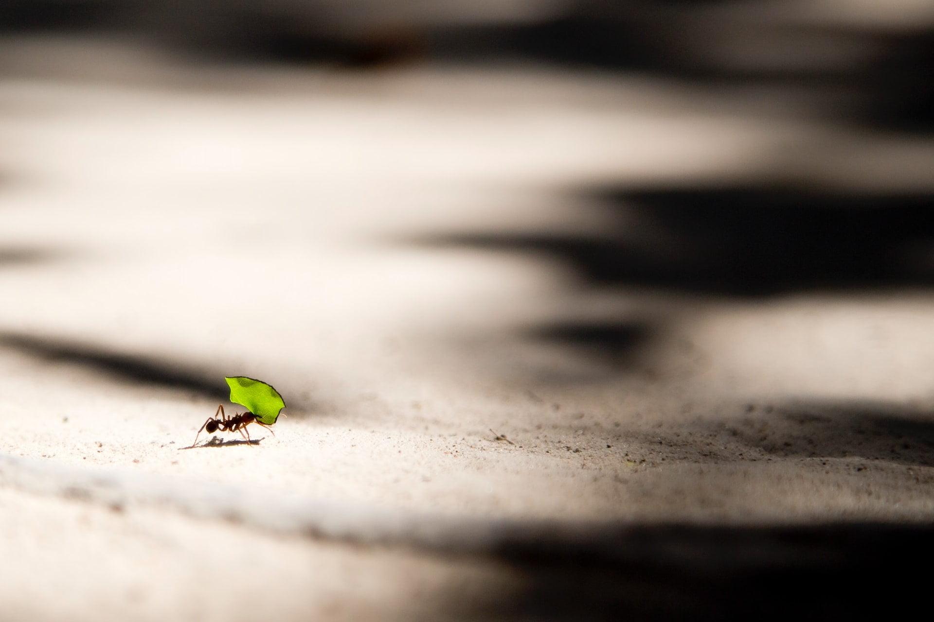 Ameisen Bewegungsspiel